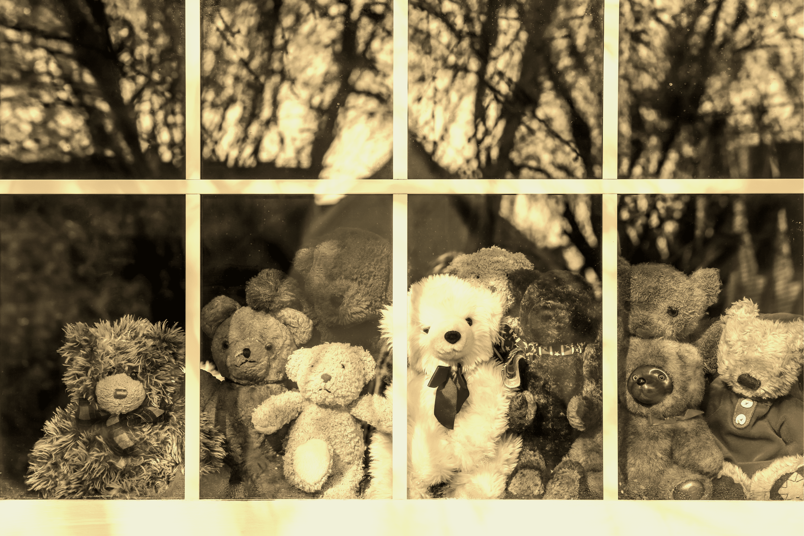 Group of teddy bears sitting in a window set up for mourning 215 indigenous children